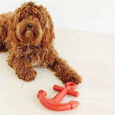 Waggo Home | Designer Dog Boutique & Ceramic Dog Bowls