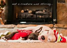 Not a creature was stirring......
