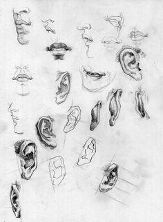 Francis Vallejo - Masters of Anatomy