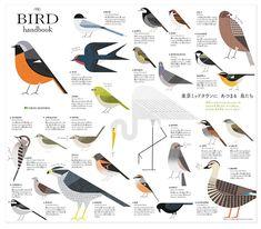 The Birds of Tokyo Beautifully Illustrated by Ryo Takemasa | Spoon & Tamago