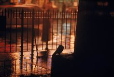 Ernst Haas, Railings in Times Square, New York on a wet day, 1955.