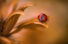 Amber lady by Mandy Disher on 500px
