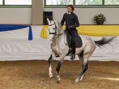 Akhal Teke in dressage by Dace Strausa