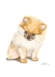 Omg idk whether to put this in my art and drawings board or my pomeranians board, oh well I'll do the first one