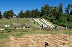 Webers Farm Fall Festival Hill Slides
