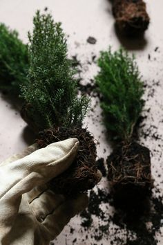 tiny trees in window boxes to last the winter | gardenista