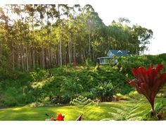 Creekside Cottage with acreage and ocean views - Image 0 - Hilo - rentals    http://www.flipkey.com/hilo-cottage-rentals/p387713/#    #hawaii #flipkey
