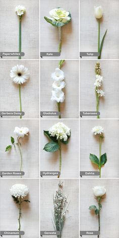 {White Wedding Flower Guide} Learn the names of some beautiful flowers so you can ask for exactly what you want when you talk to your florist!