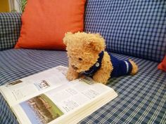 Yeee..., this is an interesting place, let's go there | Misiu, our teddy bear