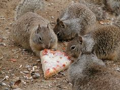 Why A Squirrel Is The Perfect Spirit Animal | The Odyssey