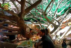 Tree restaurant in Costa Rica. How did I not go there? I must go back.