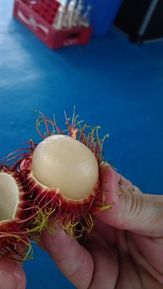 local fruit James Bond island Phuket, Thailand, 31-12-2011 11-16-48 AM by labelleaurore, via Flickr