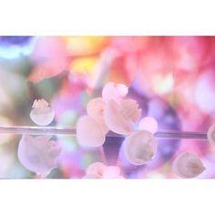 幻想的な海のイルミネーション。蜷川実花×すみだ水族館のクラゲ万華鏡トンネル|MERY [メリー]