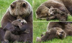 The happiest bear in the world! Cub gets a cuddle from its mother