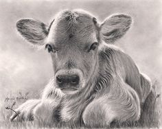 Spring calf by Glynnis Miller Pencil