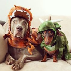 """""""These are ridiculous costumes Charlie."""" """"I know Tucker but don't blink it'll last longer."""""""