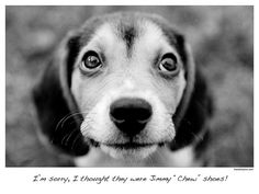 BEAGLE Puppy Dog I'm sorry I thought they were by MarieDolphin, $35.00