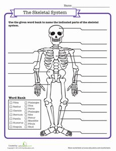 f1f37272ff9eb95abb0323e5cdaf4861 science worksheets school worksheets label the blank worksheet to match the diagram the henrie school
