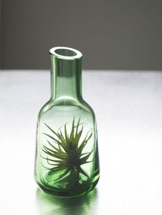 I'm going to duplicate this idea. No need to spend $20+ on this when I can find a cool old bottle, buy and air plant, and voila!