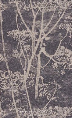 Cole And Son Cow Parsley Wallpaper By Mary Addington - lovely texture! Lace Wallpaper, Luxury Wallpaper, Contemporary Wallpaper, Pattern Wallpaper, Custom Wallpaper, Cole And Son Wallpaper, Cow Parsley, Textiles, Inspirational Wallpapers