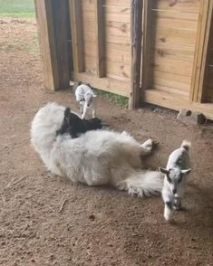 Funny Wild Animals, Animals And Pets, Cute Puppies, Cute Dogs, Dogs And Puppies, Silly Cats, Mundo Animal, Cute Little Animals, Funny Animal Videos