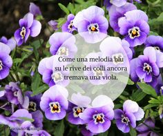 Quote by Luciano Sinisgalli #quotes #quote #aforismi #nature #natura #flowers #citazioni #naturequotes #Luciano #Sinisgalli #LucianoSinisgalli