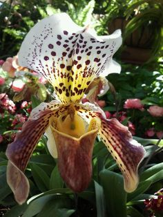from Powell Gardens