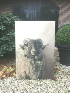 (notitle) - Tina Bergmann -  #Bergmann #notitle #Tina Oil Painting Abstract, Figure Painting, Painting & Drawing, Sheep Paintings, Animal Paintings, Goat Art, Sheep Art, Wildlife Art, Painting Techniques