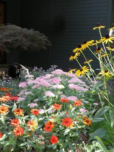 Pacific Northwest summer/fall cottage garden- sedum, zinnias, black eyed susans