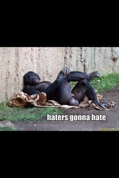 Haters go haaaate Funny Af Memes, Hilarious, Funny Cats, Funny Animals, Sports Memes, Belly Laughs, Funny Animal Pictures, Just For Laughs, Scary Things