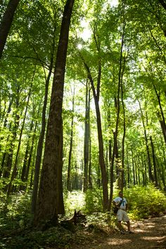So many beautiful tree's and such beautiful light shinning through them.