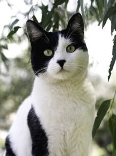 Black and White Cat by Norma