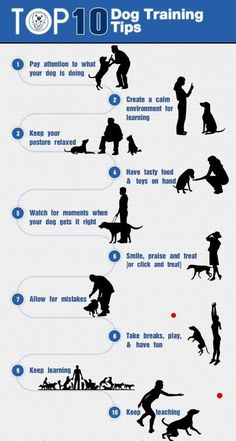 Wonderful Pics Teaching Your Dog Tricks: It's Not as Difficult as You Think - Dog Training Info Popular How Are Pets Provided Standard Obedience Training ? It contains probably the most simple directions Training Your Puppy, Dog Training Tips, Agility Training, Potty Training, Training Classes, Training Videos, Training Academy, Training Equipment, Training Kit