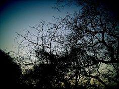 Seasonal 彩の戯(さいのぎ): 夕暮れの東郷公園 2006-03-12