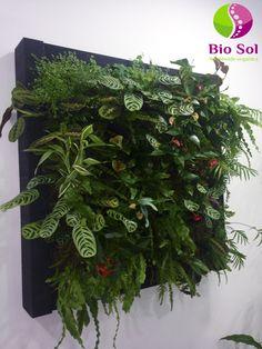 Decora tu casa u oficina con cuadros vivos. Otra forma de tener plantas en tu hogar.