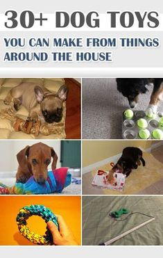 30+ Dog Toys You Can Make From Things Around the House | Tips For Women