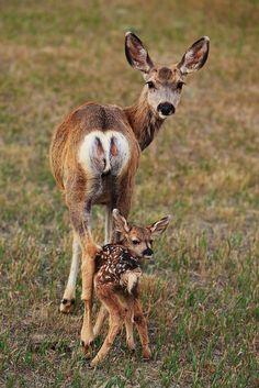 Mama Mule Deer & Her Baby