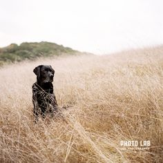 How to photograph black dogs and cats It can be tough to get great photos of black pets, but not if you keep these 5 simple things in mind.