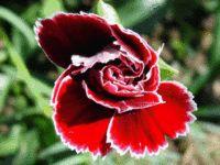 Цветок — Википедия
