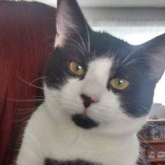 From @frogo_and_kira_kitten  #cutecatskittens #cat #love #cats #instacat #instacats #catstagram  #cats_of_instagram #catsofinstagram #meow #animals #animal #pet #pets #cute #cutecat #kittens #lovecats #instaphoto #awesome #nofilter #followforfollow #follow4follow #picoftheday #kitten #petoftheday #adorable #catlover