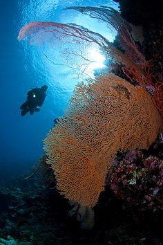 Wakatobi Sea Fan
