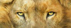 13_WildEyes_Lion_Pic.jpg (700×280)