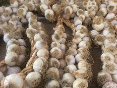 Do you know the famous Sicilian garlic ?