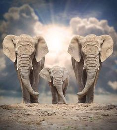 Photo about African elephant (Loxodonta africana) family on the road. Image of animals, elephant, environment - 43856868 Elephant Family, Elephant Love, Elephant Art, Elephant Quotes, Elephants Photos, Elephant Pictures, Animal Pictures, Baby Elephants, Baby Cows