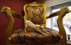 """Dyushes, a Don Sphynx cat, stretches on an armchair at the """"Cats Republic"""" art cafe in St. Petersburg. The cafe includes an exhibition area, a library and a separate hall with cats living inside. (Reuters)"""