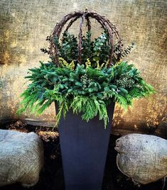 Winter Planters containing Lit grapevine wrapped spheres, Citrus Eucalyptus, Lime berry spray and lit mixed greens. By: Andrew VanHarken Christmas Urns, Outdoor Christmas Decorations, Holiday Decor, Christmas Garden, Fall Decor, Winter Container Gardening, Container Plants, Winter Porch, Winter Garden