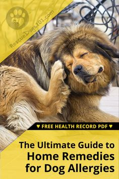 You want to know what you can do to help your dog with his allergies. I just want you to know I've been there… I always recommend finding easy home remedies for dogs with allergies before heading down the road of expensive allergy testing. Dog Clicker Training, Dog Training, Training Tips, Dog Health Tips, Pet Health, Pet Care Tips, Dog Care, Dog Spay, Cheap Pets