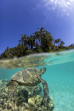Sea turtle, Maui, Hawaii