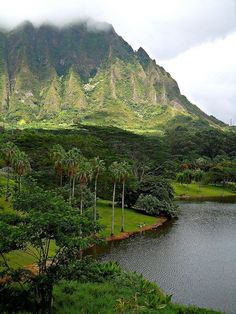Hoolaluhia Botanical Garden in Kaneohe, Oahu - Hawaii   USA. My view everyday while I lived on the windward side........