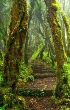 Hoh Rain Forest Trail at Olympic National Park in Washington State. by gladys